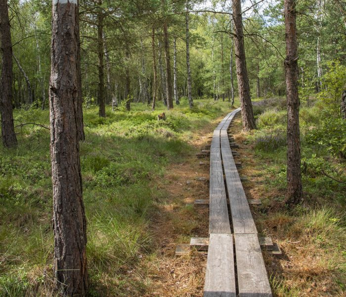 Skogsbygd_Tranerödsmosse Söderåsen